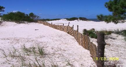 EL PINAR. La Red de la Comarca Costera llama voluntarios para colocar vallas cortaviento en playa El Pinar.