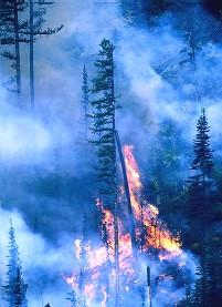 Jaureguiberry. Un incendio en pleno invierno fue controlado por Bomberos.