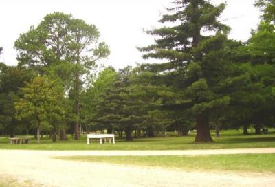 El rey Momo tendrá su Reina el domingo, en el Parque Artigas en Sauce