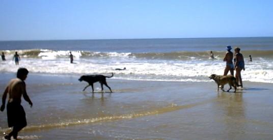 Los pescadores deberán tolerar los perros en la zona de pesca