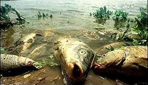 Estudian caso de mortandad de peces en el Arroyo Pando