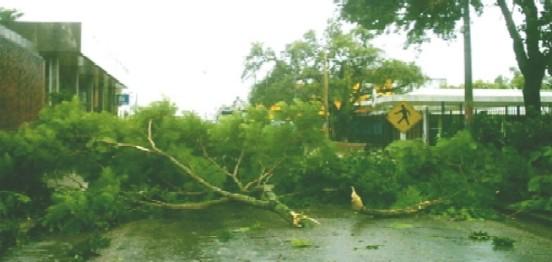 Tránsito sauceño interrumpido por la caída de árboles debido al temporal