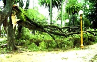 Policía canaria informa daños causados por el viento del 1ero. de marzo.