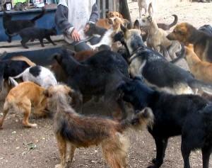 2 mujeres sauceñas conviven con 27 perros y 90 gatos en 7 piezas de su casa, pegado al Casmu