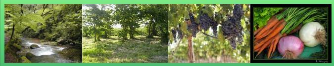 Resisten plantio de 400 hectáreas de soja transgénica en la zona de Cuchilla de Rocha