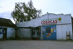COSOCAS primera y única cooperativa canaria con 50 años de continuidad